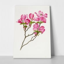 Pink dogwood array 129374651 a