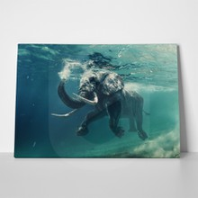 Swimming elephant 360848669 a