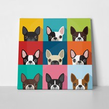 Boston terrier dog full color 375627028 a