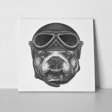Dog portrait english bulldog vintage helmet 535207540 a