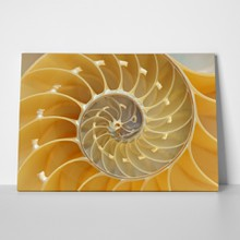 Yellow nautilus shell