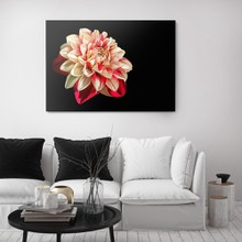 Oil painting drawing dahlia