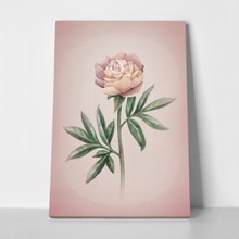 Watercolor peony pink flower 203759449 a