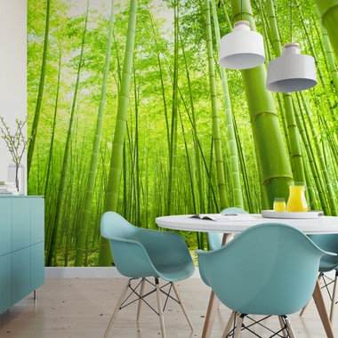 Bamboo forest a