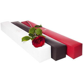 IN ROOM AMENITY: Ecuadorian Rose in a Box (70cm)