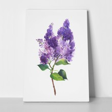 Branch of lilac watercolor 700357750 a