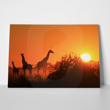 African wildlife sunset 1 a