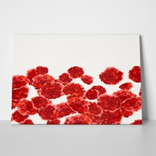 Carnation red watercolor pattern 455307562 a