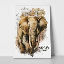 Wildlife elephant watercolor painting 556250311 a