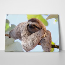 Happy sloth hanging on tree 243273610 a