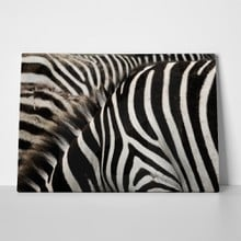Zebra stripes close up 60269935 a