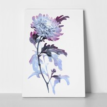 Ink illustration flower blue chrysanthemum 515346706 a