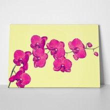 Orchid yellow background 474761845 a