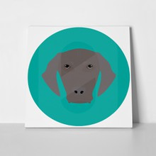 Weimaraner head isolated on turquoise 454909633 a