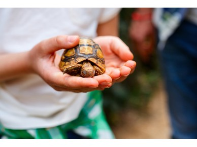 Let Your Kids Feed Turtles: At The Dubai Turtle Rehabilitation Project