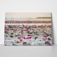 Lake of pink lotus 1063869683 a