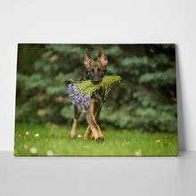 German shepherd brings flowers 544273210 a