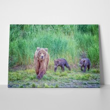 Grizzly bear two cubs digital oil 252138484 a