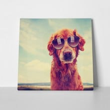 Cute golden retriever toned retro 250710067 a