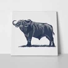 African buffalo on grass blue color 562186435 a