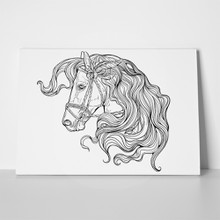 Portrait horse long hair 420841201 a