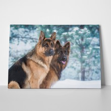 Two german shepherd dogs winter 762944392 a