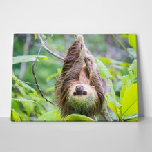 Sloth hanging on tree 637495183 a
