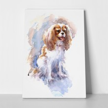 Watercolor cavalier king charles spaniel 511651150 a