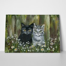 Black and grey pet cats 363315818 a