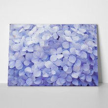 Lilac hydrangea floral background 400684378 a