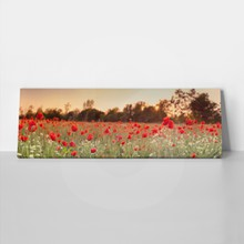 Red poppy field 281126147 a