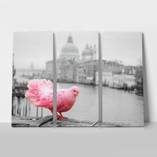 Pink pigeon on bridge