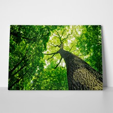 Forest tree sunlight background 95030080 a