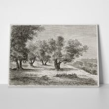 Old illustration olive grove 82227487 a