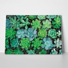 Succulent plant in pot 1036292293 a