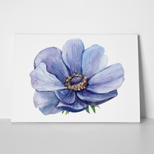 Flower anemone blue 756398008 a