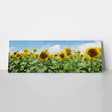 Sunflowers 33114982 a