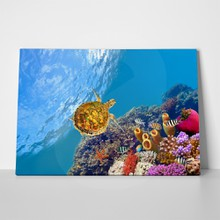 Coral and turtle 76069222 a