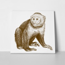 Monkey engraving illustration 419980876 a