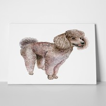 Dog poodle watercolor 624010799 a