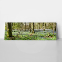 Bluebells in wood 111902426 a