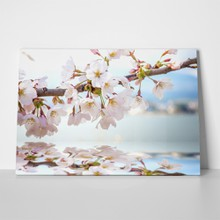 Beautiful cherry blossom shadow on water 296353796 a