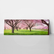 Cherry blossom trees alley in garden 411189835 a