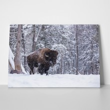 Buffalo resting snow storm 789502594 a
