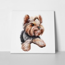 Watercolor closeup yorkshire terrier 449438890 a