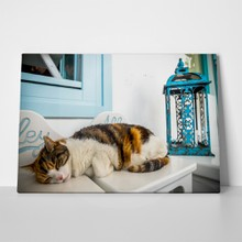 Cat in paros 739888246 a
