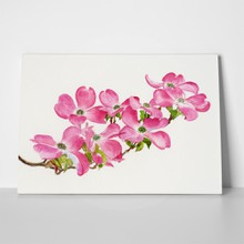 Pink dogwood watercolor 137343020 a
