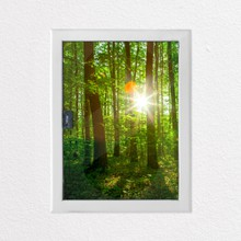 Green forest a