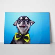Beautiful chihuahua dog bowtie 172598054 a