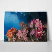 Colourful soft corals 322124606 a